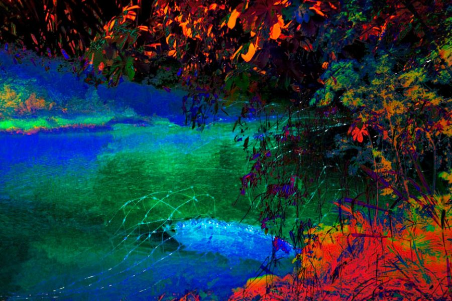 NIGHT FISH 200x112 cm